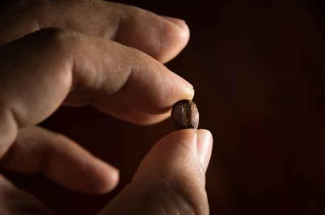1粒のコーヒー豆を持つ