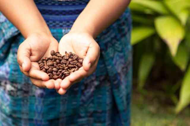 グアテマラ産コーヒー豆
